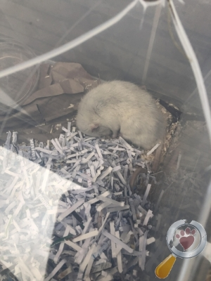 found Mouse/Rat