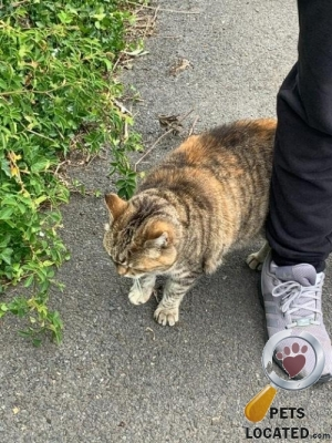 Cat found in Forestdale, Greater London