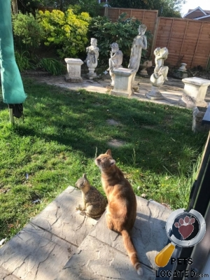 Lost Cat :: Anlaby With Anlaby Common, East Riding Of Yorkshir (HU10)