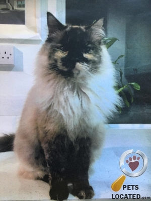 Cat lost in Eastbourne