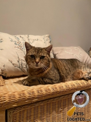 Cat lost in Hammersmith and Fulham