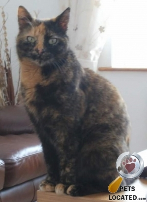 Cat lost in Clay Cross, North East Derbyshire