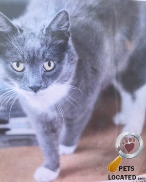 Cat lost in Long Ashton, North Somerset