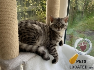 Cat lost in Nether Poppleton, York