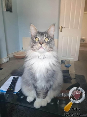 Cat lost in Bournemouth, Christchurch And Poole