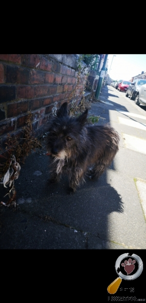 Dog found in South Shields, Tyne and Wear