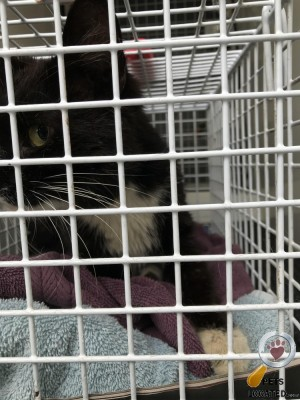 Cat found in Worcester, Worcestershire