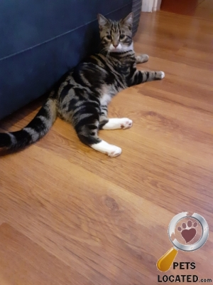 Cat lost in Rossington, Doncaster