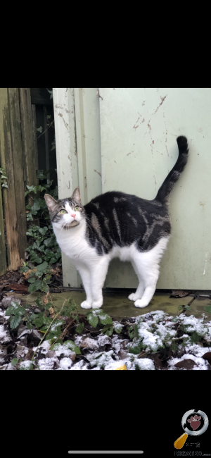 Cat lost in Edlington, Doncaster